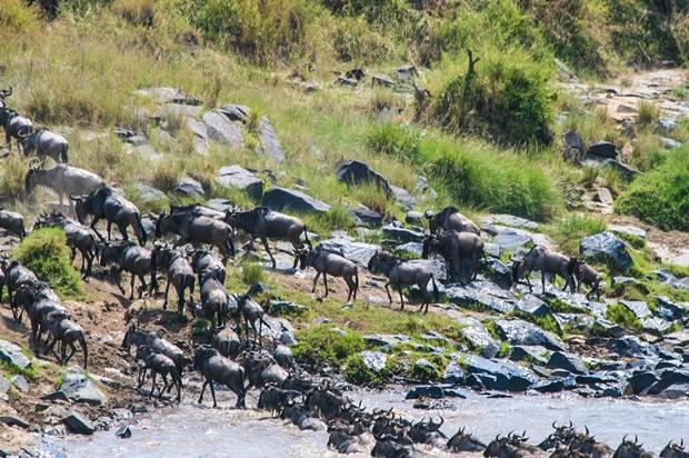 Kenya_Great Migration July 13